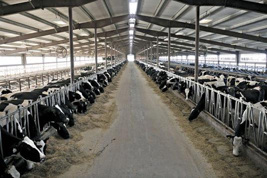 Проектирование молочных ферм и коровников